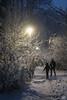 DN9A6769 (Josette Veltman) Tags: sneeuw snow heino snowflakes sneeuwvlokken overijssel salland nederland