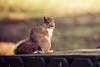 Scrutinizing Squirrel (sniggie) Tags: ashland kentucky lexington animal squirrel