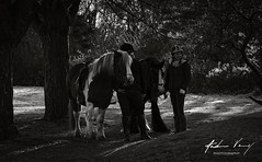 344/365 Country Pastimes (Explored 11/12/2017) (andrew.varney) Tags: monochrome blackandwhite blackwhite horse people candid 365 surrey hindhead nikon d5100 outdoors outside animals