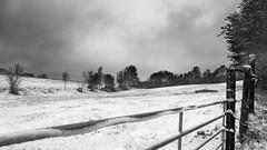 """""""om de hoek"""" (B.Graulus) Tags: photography picture photo landscape landschap herent flanders vlaanderen vlaamsbrabant belgium belgië belgique blackandwhite snow sneeuw field velden winter outdoor"""