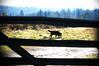 Bonnie😊 (sugarelf) Tags: pacificnorthwest mydog bonnie fence december pet nature home