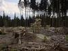 Schierke_e-m10_1019021975 (Torben*) Tags: olympusm1442mmf3556iir olympusomdem10 rawtherapee harz schierke wald forest