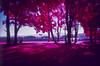 SCN1864 (Doug Golupski) Tags: newzealand plastic plasticfantastic film fpp filmphotographyproject kodak analog aerochrome colorinfrared colorir infrared ir