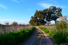 Ghost trail (markvanmarx) Tags: trail way field fieldphotography road landscape fieldscape walk free nature adventure travel trip lifestyle life freedom discover tree photojournalism buenosaires
