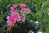 Cadix (hans pohl) Tags: espagne andalousie cadix fleurs flowers plantes plants nature