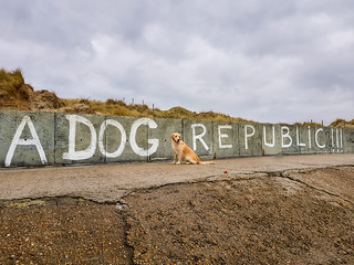 Collinn - A Dog Republic