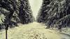 Neige du 28/12/2017 - 01 (Lцdо\/іс) Tags: lцdоіс fagnes fagnard winter belgique belgium belgie belgian décor venn venen hohes hoge hautesfagnes nature réserve naturelle parc park national barraque michel botrange waimes wallonie wallonne région liège province promenade
