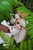 .: Asgeir & Mickayla,:. (.: Miho :.) Tags: pullip pullipdoll doll dolls dollphotography taeyang taeyangdoll obitsu parabox groovedoll couple viking vikings taeyangnatsume pullipfc ooakdoll