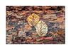 Baumstamm (Fujigraf) Tags: natur stamm baum blatt moos gras farbe jahreszeiten fuji xt20 pentacon 50mm wald
