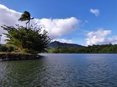 Wailua River State Park - Fern Grotto (39) (pensivelaw1) Tags: hawaii kauai wailuariverstatepark ferngrotto