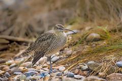 Canadian Wildlife (VLADIMIR NAUMOFF) Tags: wildlife nature birds animals vladimirnaumoff nikon d850 d500 canada quebec ducks