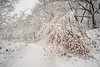 The last colours (Rob Schop) Tags: wideangle dehamert arcen winter sonya6000 wit nederland outdoor bos snow forrest landschap landgoeddehamert samyang12mmf20 sneeuw autumm a6000 f56 handhold limburg
