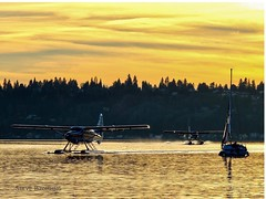 Landing Zone (otterdrivernw) Tags: xf50140 xt2 series x fujifilm fuji pnw upperleftusa washington lakes sailboat otter dehavilland seaplane seattle floatplane