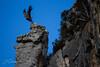 _MG_6748 (jonathansobrino) Tags: buitre vuelo montaña aves rioja navarra cielo pájaros animales selva monte mountain travel