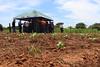 IMG_3575 (Cooperacion Brasil-FAO) Tags: algodón proyecto cooperaciónsursur brasilfao paraguay utd unfao visita