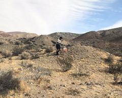 035 Late For The Party (saschmitz_earthlink_net) Tags: 2017 california orienteering redrockcanyon statepark laoc losangelesorienteeringclub mojavedesert desert kerncounty elpasorange