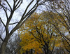 Tangled Bark with Autumn Leaves (Scott Yeckes) Tags: colors green landscape nyc nature newyork overcast autumn aypclub bark blue branches centralpark centralparknyc fall foliage leaves manhattan onlyinnewyork orange perspective pointofview streetphotography tangledbark trees yellow