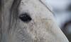 Schau mir in die Augen (Ernst_P.) Tags: aut inzing tirol wires tier pferd auge makro österreich säugetier austria autriche tyrol samyang walimex 135mm f20 eye ojo