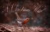 A Christmas Wish (Nickerzzzzz - Thanks for stopping by :)) Tags: somerset greylake ©nickudy nickerzzzzz theartofphotography wwwdigittaliacom canoneos5dmarkiii ef100400mmf4556lisiiusm photograph photography bird beak wildlife wings nature feathers rspb animal outdoor robin erithacusrubecula christmas wish 2017 bokeh