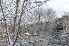 IMG_3706 (kz1000ps) Tags: albany newyorkstate upstate capitaldistrict capitalregion hudsonrivervalley rensselaer december christmas holidays snow snowfall sunny windy whitechristmas northgreenbush home trees yard