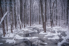 W i n t e r S c a p e (Chris Robinson Photography) Tags: winter17 winterscape sigma35mmf14 snowcover coldoutside naturepark winteriscold winterweather weather frozen trees forest reflection water