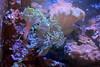 Estonian Museum of Natural History (Tallinn, 20171228) (RainoL) Tags: crainolampinen 2017 201712 20171228 aquarium d5200 december eestiloodusmuseum estonia fish geo:lat=5944090787 geo:lon=2474534690 geotagged harjumaa indoors kesklinn tallinn tallinnoldtown vanatallinn winter est estonianmuseumofnaturalhistory museum