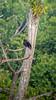 20171217_074751 (jaglazier) Tags: 121717 2017 animals birds buzzards copyright2017jamesaferguson december deciduoustrees ecuador napowildlifepreserve naturepreserves orellana rainforests trees forests parks vultures orellanaprovince