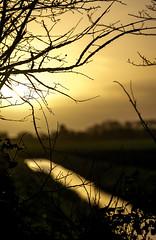 Golden morning (Wouter de Bruijn) Tags: fujifilm xt1 fujinonxf90mmf2rlmwr sunrise dawn morning nature landscape bokeh depthoffield trench ditch water branches tree bush gold golden light outdoor veere walcheren zeeland nederland netherlands holland dutch