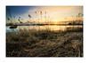 Abendliche Elblandschaft (PhotoChampions) Tags: landscape landschaft river elbe hamburg deutschland germany evening abend sunset sonnenuntergang schilf ufer wolken gelb yellow fluss