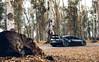 Woodland. (Alex Penfold) Tags: bugatti veyron supersport super sport sports carbon fibre argentina 2017 alex penfold