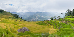 _J5K4080-87.0914.Bát Xát.Lào Cai (hoanglongphoto) Tags: asia asian vietnam northvietnam northeastvietnam landscape scenery vietnamlandscape vietnamscenery vietnamscene harvest terraces teracedfields sky hillside flanksmountain imagesize1x2 đôngbắc làocai bátxát ruộngbậcthang lúachín mùagặt ruộngbậcthangbátxát bátxátmùagặt bátxátmùalúachín sườnđồi sườnnúi bầutrời tỉlệkíchthướcảnh1x2