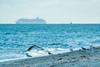 The loveboat (www.sophiethibault.ca) Tags: miami floride décembre 2017 bateau goélands oiseaux plage mer ocean birds seagulls ciel