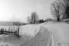Late afternoon (Papaye_verte) Tags: hiver field neige paysage landscape winter champ snow piopolis québec canada