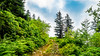 Nature's Path (ozkantayfun) Tags: path nature forest road green trees clouds sky ciel jungle stone view scenery