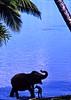 An Elephant's happy hour (gerard eder) Tags: world travel reise viajes asia southasia srilanka bentota elephant wasser water paisajes people peopleoftheworld blue outdoor natur nature naturaleza landscape landschaft panorama animals tiere animales