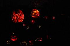 IMG_6557 (comtrag) Tags: jackolanterns rogerwilliamszoo rhodeisland halloween pumpkins pumpkincarving