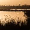 Ente bei Sonnenaufgang (IIIfbIII) Tags: anklamerstadtbruch sunlight sun 11 quadrat morgenlicht sonnenaufgang water light naturephotography nature canon mecklenburg vorpommern lake moor wintercold duck