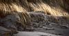 Küstendüne (AstridSusann) Tags: wind dünen düne dune sea strand nordsee nl