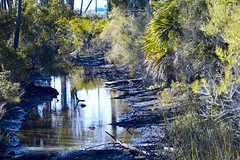 Alligator Haven