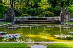 Water Lily (olle.graf) Tags: 2017 bern june switzerland rosengarten pond waterlily