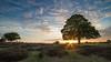 New forest sunset (oldlensguy) Tags: newforest sunset hdr starburst astoundingimage