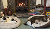 December 17th 2017 - Project 365 (Richard Amor Allan) Tags: cat cats feline felines moggy moggies sleeping sleep catbed fireplace cosy project365