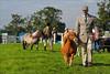 A Gentle Stroll (meniscuslens) Tags: shetland pony show bucks county buckinghamshire weedon aylesbury man woman field grass