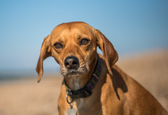 Kali (Paul`s dog photography) Tags: