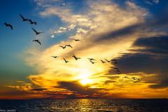 Marco Island Sunset, Florida (alex2k5) Tags: boattour beach sunset marcoisland ecoendeavors water sonya7 gulf sony gulfofmexico southwestflorida sonyalpha florida