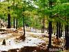 #Bhurban #Pakistan #PearlContinental #PearlContinentalBhurban #Forest #Rain #Snow #Snowfall #Trees #Nature #BeautifulPakistan #Travel #NaturalBeauty #TravelDiaries #PakistanDairies #Holidays #Vacations #Sky# #Clouds #Winters #Cold #Sunset #Night #Tourism (Siddikify) Tags: bhurban pakistan pearlcontinental pearlcontinentalbhurban forest rain snow snowfall trees nature beautifulpakistan travel naturalbeauty traveldiaries pakistandairies holidays vacations sky winters cold sunset night tourism clouds
