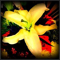 Natural Wonder (dimaruss34) Tags: newyork brooklyn dmitriyfomenko image flower lily