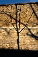 Paris (Joseff_K) Tags: diapositive leica arbre tree mur wall ombre shadow slide film inversible ektachrome leicam6