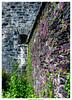 Alte Mauern (dirkbreisch) Tags: celtic einfachnurgut ringofkerry flowers irland dirkbreischphotography sony blumen sonya7ii landscape garrinishisland 1025fav