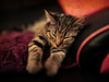 Big relax ... (Julie Greg) Tags: pet cat kitten animal rest colours